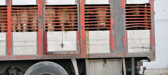 Transport krav na jatka