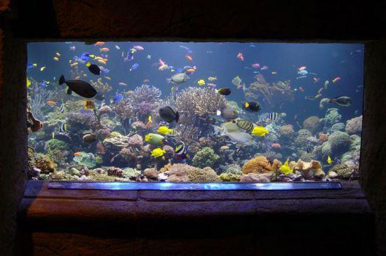 Ryby v zajetí